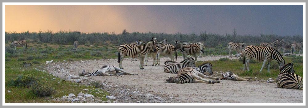 Etosha National Park - Wikitravel
