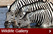 Wildlife-gallery