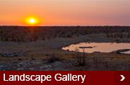 landscape-gallery