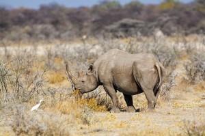 071 Etosha Wildlife