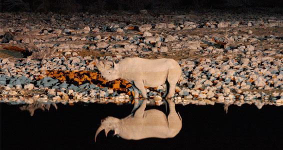 black rhino at Okaukeujo waterhole