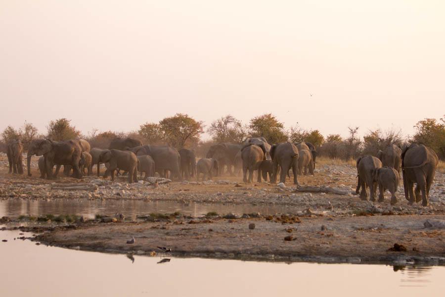 Namutoni elephant