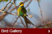 bird-gallery