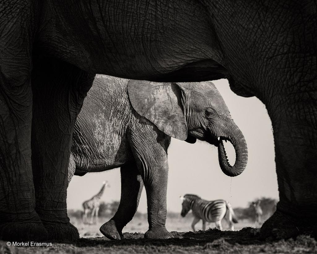 wildlife-photographer-year-2015